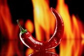 image of cayenne pepper  - Red hot chili pepper on fire background - JPG