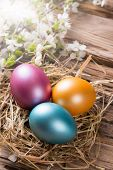 Spring white blossoms on wooden planks surface with colored easter eggs. Free space for text
