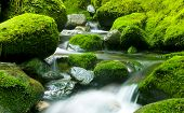 Peaceful Nature Stream, New Zealand.