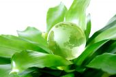 stock photo of environmental protection  - Globe on plant representing environmental protection concept US Version - JPG