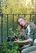 The young woman on a balcony lands petunia seedling