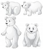 Illustration of the four white polar bears on a white background