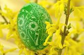 traditional scratched handmade Easter egg and forsythia flowers