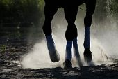 stock photo of stable horse  - The horse is galloping along the sand - JPG
