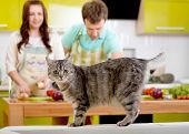 Cat Watching To The Camera With Married Couple On The Background At The Kitchen