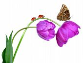 tulips with butterfly and ladybugs