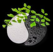 Symbol Yin-yang Of Stone Texture, The Sign Of The Two Elements With Twig Fern And Few On Water Black