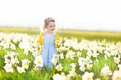 Beautiful Curly Toddler Girl In A Blue Dress Playing In A Field Of Yellow Daffodil Flowers