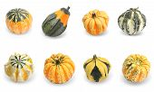 image of gourds  - Collection of gourd pumpkins - JPG