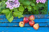 Sweet Apples On Wooden Garden Chair