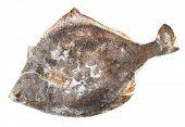 picture of flounder  - Frozen flounder - JPG