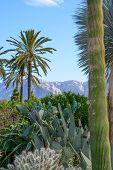 Lush Cacti Garden