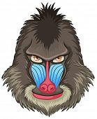 Illustration of a mandrill baboon head