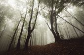 Dark spooky forest with fog and light