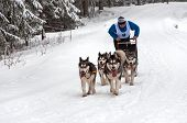 Husky Dog Sled Race