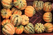 Crate Filled With Freshly Harvested Fall Squash