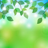 vector illustration of tree branches in sunny day