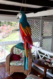 image of polly  - A favourite ornament at a Cottage in St Lucia - JPG