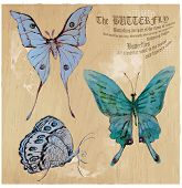 picture of mimicry  - BUTTERFLIES pack  - JPG