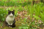 picture of kitty  - Black white kitty sitting and hiding in the grass