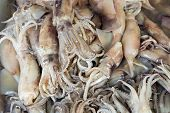 foto of sucker-fish  - Fresh Squid on a market stall for sell  - JPG