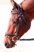 Horse head foto.