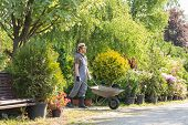 pic of wheelbarrow  - Man pushing wheelbarrow at garden - JPG