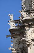 image of gargoyles  - Gargoyles in Notre Dame Cathedral - JPG