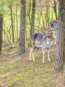 foto of deer horn  - Herd of deer in the wild - JPG