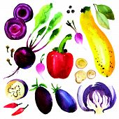 pic of bay leaf  - Watercolor vegetables and herbs - JPG
