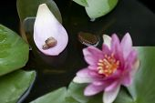 image of mollusca  - The snail crawling on the petals - JPG
