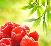 Ripe raspberries over abstract green background
