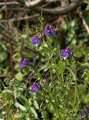 Violetas flores rurales en una hermosa mañana del sol