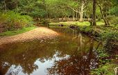 Beautiful Lush Forest Scene With Stream And Touch Of Autumn Colors In New Forest, England