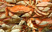 stock photo of craw  - crabs on sale at a local market in san francisco - JPG