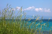Grass, Sea Ans Blue Sky