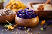 natural alternative herbal medicine with dried herbs and flowers - alternative medicine poster