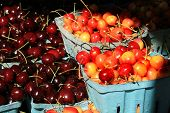 picture of bing  - Cherries in light blue boxes for sale at the farmers market - JPG