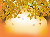 Herbstliche Wald