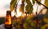 Herbal Medicine Or Aromatherapy - Bottle > Bottle Of Essential Oil With Fresh Herbal poster