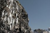 Cascade Of Icicles Thaw On A Cliff Face