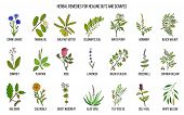 Herbal Remedies For Healing Cuts And Scrapes. Hand Drawn Set Of Medicinal Herbs poster