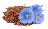 stock photo of flax seed  - Dried seeds of flax with flowers - JPG