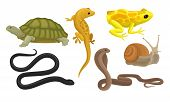 Cold-blooded Animals, Amphibians And Reptiles, Snakes, Snail Vector Illustration Set Isolated On Whi poster