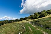 Footpath Between Green Pastures And A Beech Forest In Italian Alps. Monte Baldo Near The Lake Garda, poster