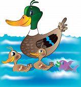 Ducks And Fish