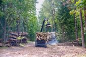 Manipulator Loader Logs, Short Log Truck, Timber Truck, Loading Logs In The Forest poster