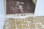 Slippery Surface Near The Entrance To The House Entrance, Winter Time, Foot Cleaning Mat poster