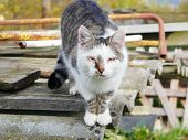 Abandoned Cat. Abandoned Crying Cat With Conjunctivitis. Homeless Animals poster