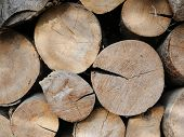 Dry Logs Close-up. Background From Round Wooden Logs. Beautiful Lumber From Trees Of Different Speci poster